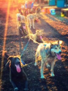 NH_Grand_Adrenaline_Activities_Muddy_Paw_Sled_Dog_Kennel